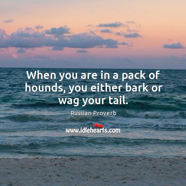 When you are in a pack of hounds, you either bark or wag your tail. Russian Proverbs Image