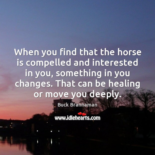 Image, When you find that the horse is compelled and interested in you,