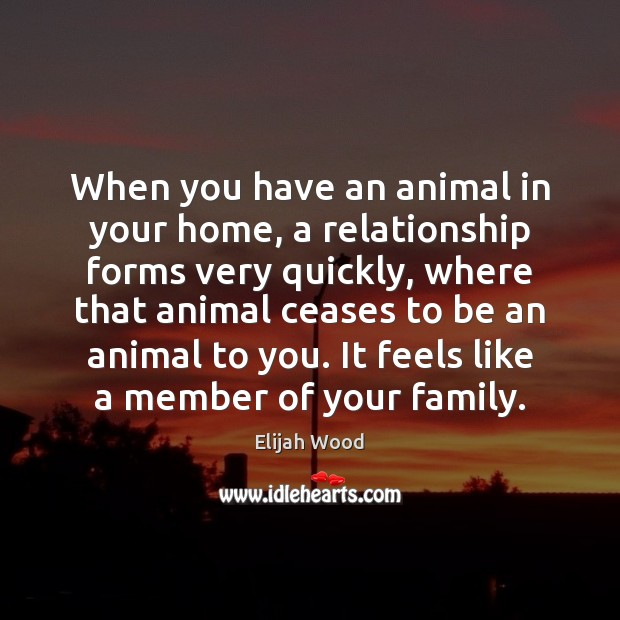When you have an animal in your home, a relationship forms very Image