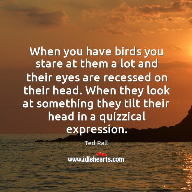 When you have birds you stare at them a lot and their eyes are recessed on their head. Ted Rall Picture Quote