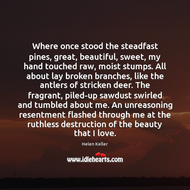 Image, Where once stood the steadfast pines, great, beautiful, sweet, my hand touched