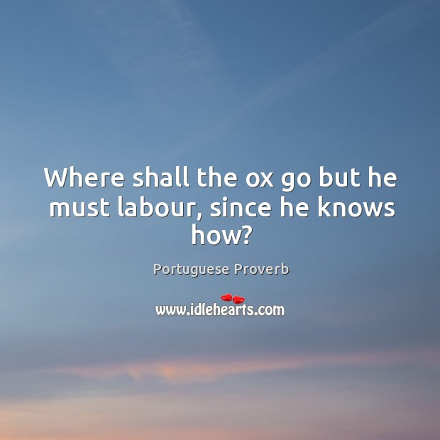 Where shall the ox go but he must labour, since he knows how? Portuguese Proverbs Image