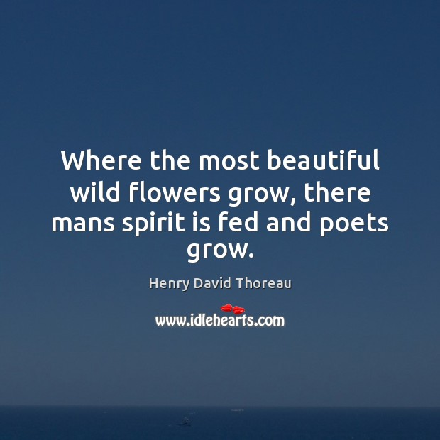 Where the most beautiful wild flowers grow, there mans spirit is fed and poets grow. Image