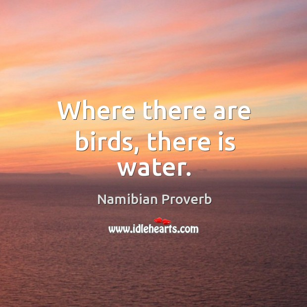 Where there are birds, there is water. Namibian Proverbs Image