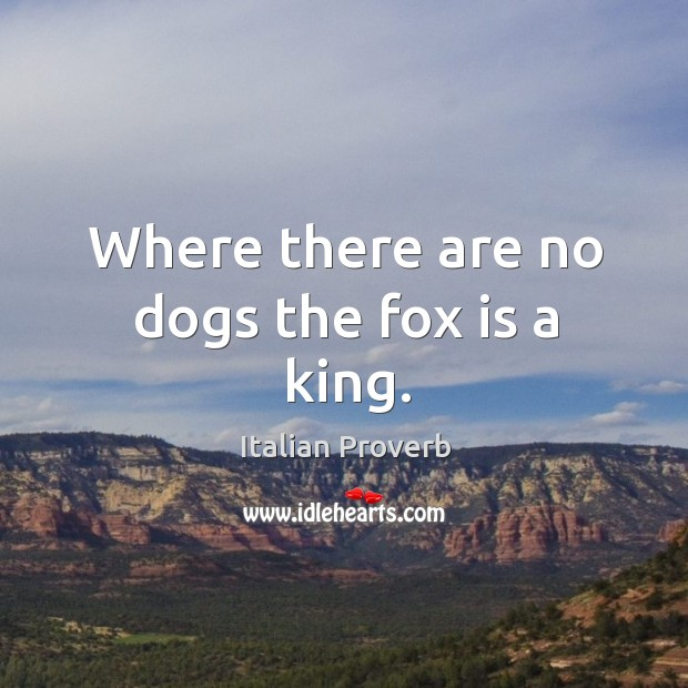 Image, Where there are no dogs the fox is a king.
