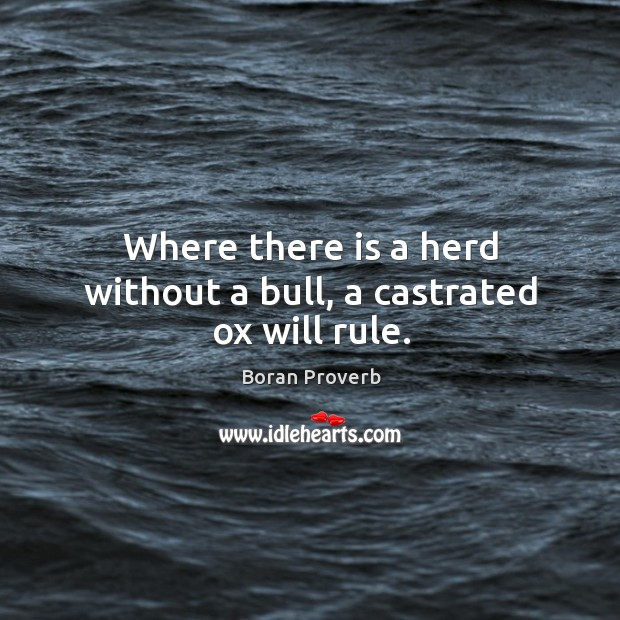 Where there is a herd without a bull, a castrated ox will rule. Boran Proverbs Image