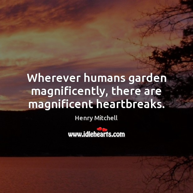 Wherever humans garden magnificently, there are magnificent heartbreaks. Henry Mitchell Picture Quote