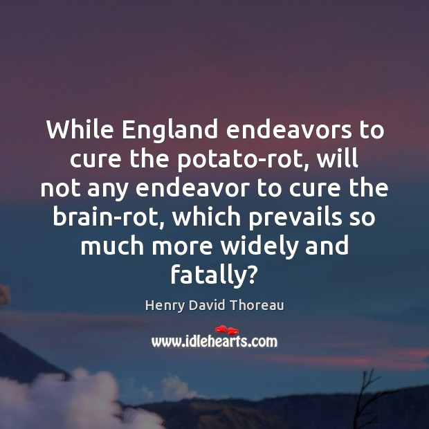 While England endeavors to cure the potato-rot, will not any endeavor to Henry David Thoreau Picture Quote