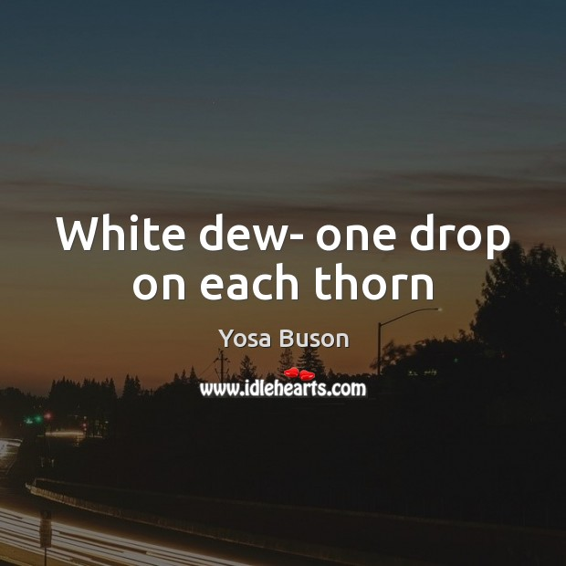 Image, White dew- one drop on each thorn