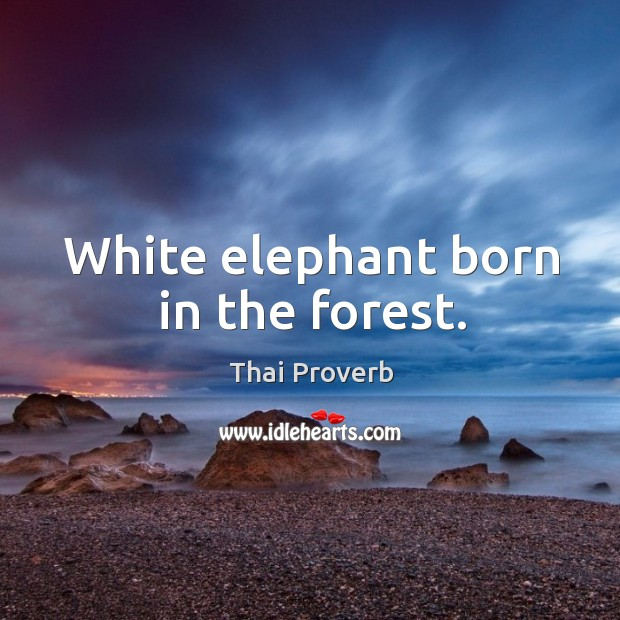 White elephant born in the forest. Thai Proverbs Image