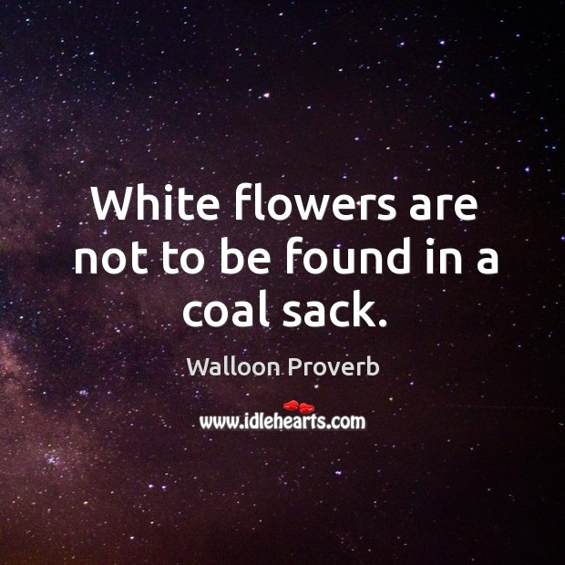 White flowers are not to be found in a coal sack. Walloon Proverbs Image