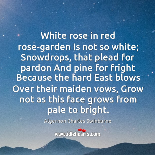 Image, White rose in red rose-garden Is not so white; Snowdrops, that plead