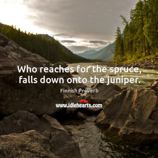 Who reaches for the spruce, falls down onto the juniper. Finnish Proverbs Image