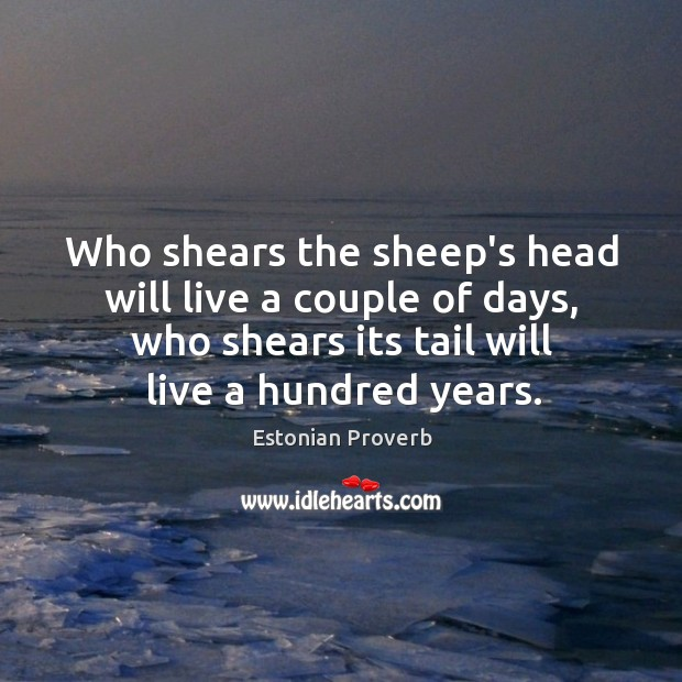Image, Who shears the sheep's head will live a couple of days