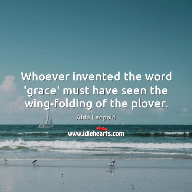 Image, Whoever invented the word 'grace' must have seen the wing-folding of the plover.