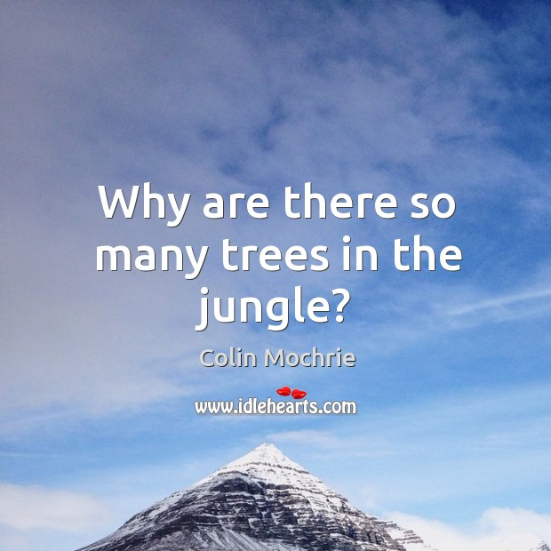 Why are there so many trees in the jungle? Image