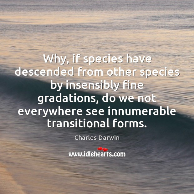 Why, if species have descended from other species by insensibly fine gradations, Charles Darwin Picture Quote