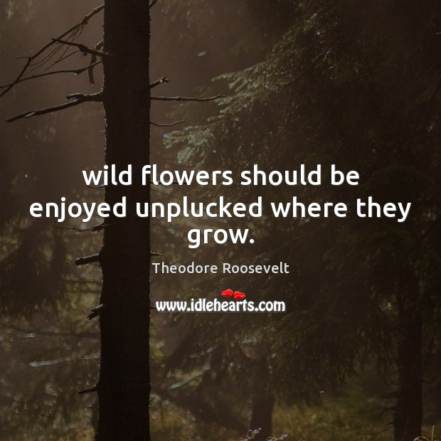 Image, Wild flowers should be enjoyed unplucked where they grow.
