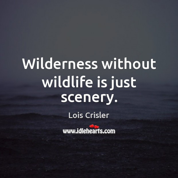Wilderness without wildlife is just scenery. Image