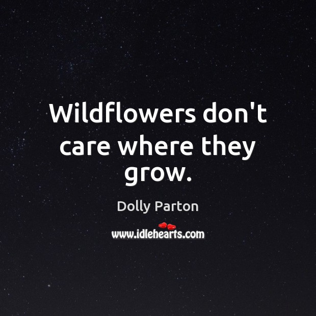 Wildflowers don't care where they grow. Image