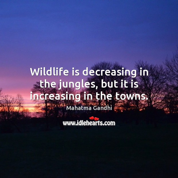 Image, Wildlife is decreasing in the jungles, but it is increasing in the towns.
