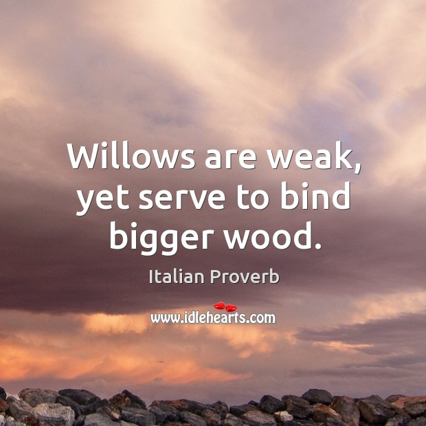 Willows are weak, yet serve to bind bigger wood. Image