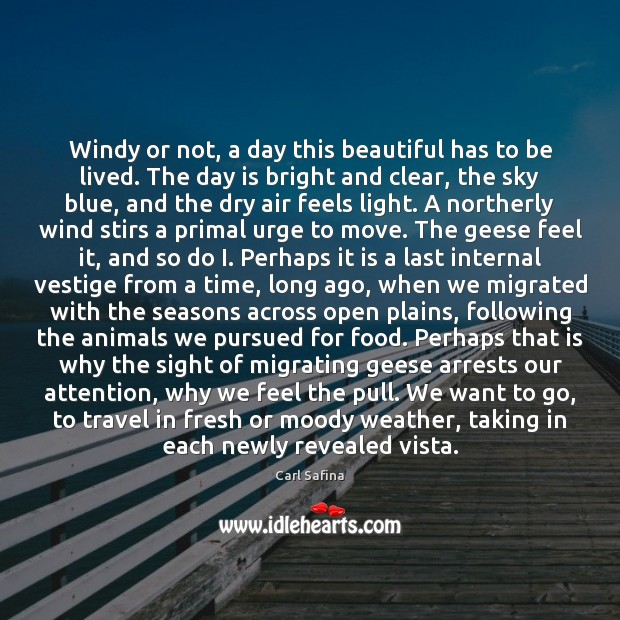 Windy or not, a day this beautiful has to be lived. The Image