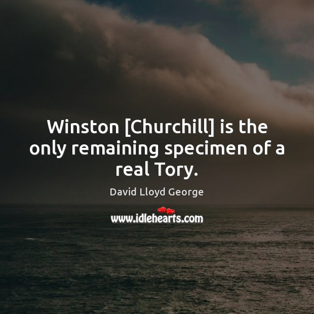 Winston [Churchill] is the only remaining specimen of a real Tory. David Lloyd George Picture Quote