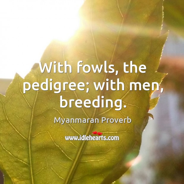 With fowls, the pedigree; with men, breeding. Myanmaran Proverbs Image