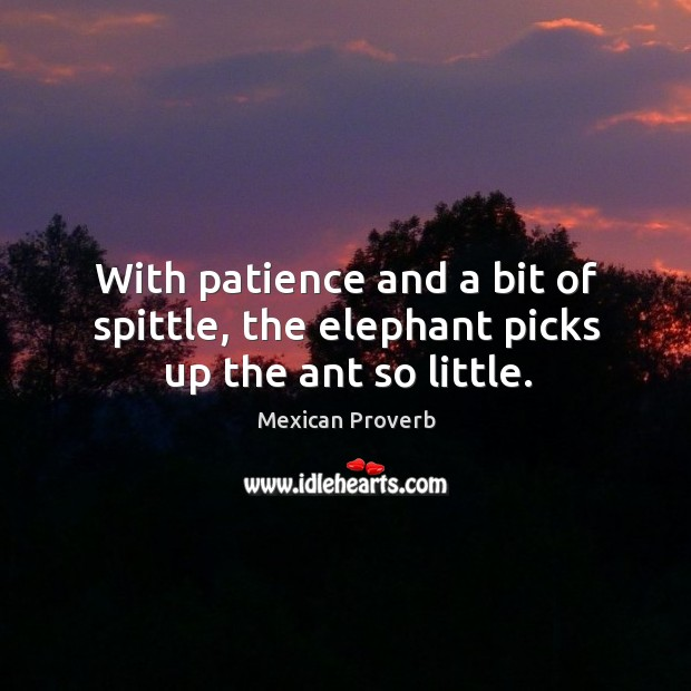 With patience and a bit of spittle, the elephant picks up the ant so little. Mexican Proverbs Image