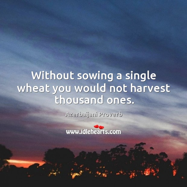 Without sowing a single wheat you would not harvest thousand ones. Azerbaijani Proverbs Image