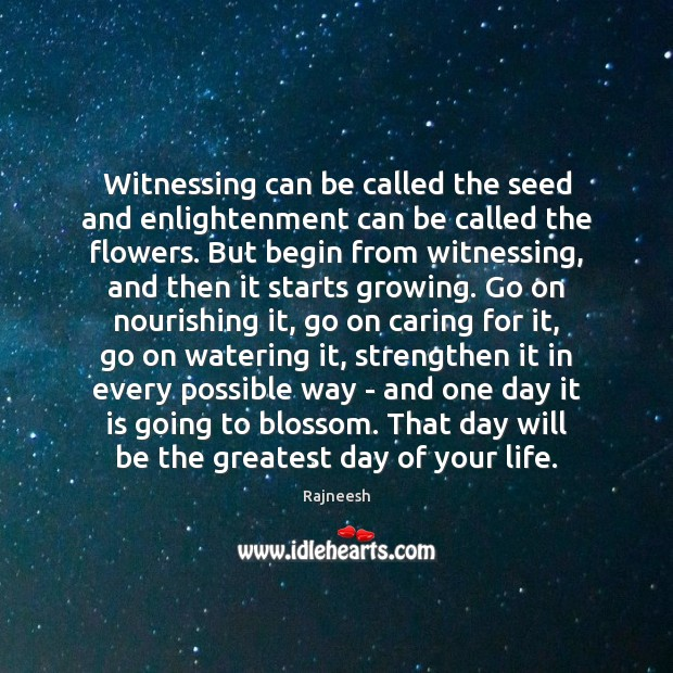 Witnessing can be called the seed and enlightenment can be called the Rajneesh Picture Quote