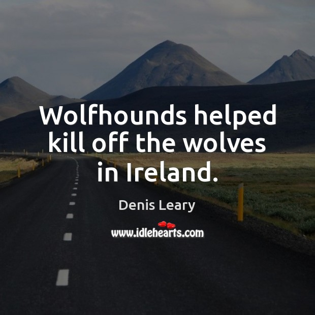 Wolfhounds helped kill off the wolves in Ireland. Denis Leary Picture Quote