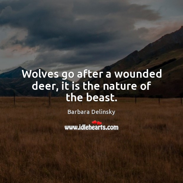 Wolves go after a wounded deer, it is the nature of the beast. Image