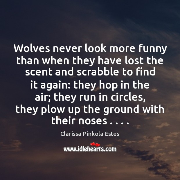 Wolves never look more funny than when they have lost the scent Image