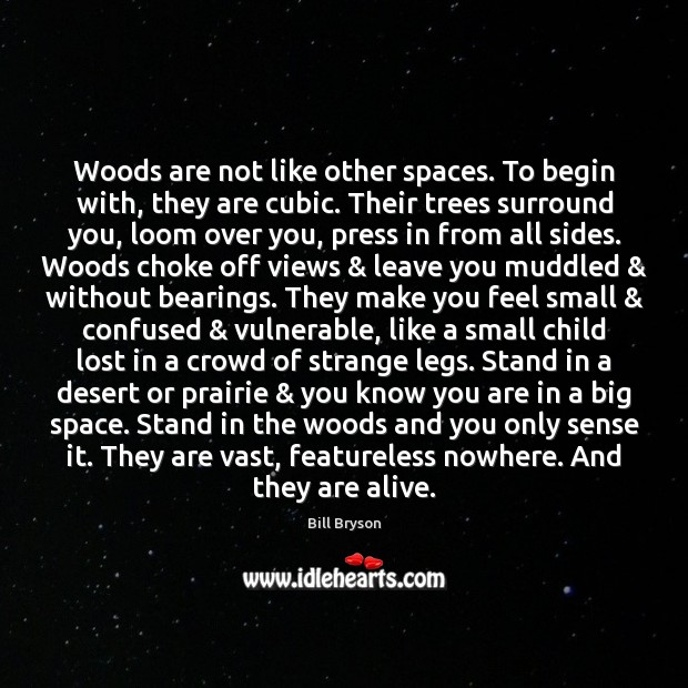 Image, Woods are not like other spaces. To begin with, they are cubic.