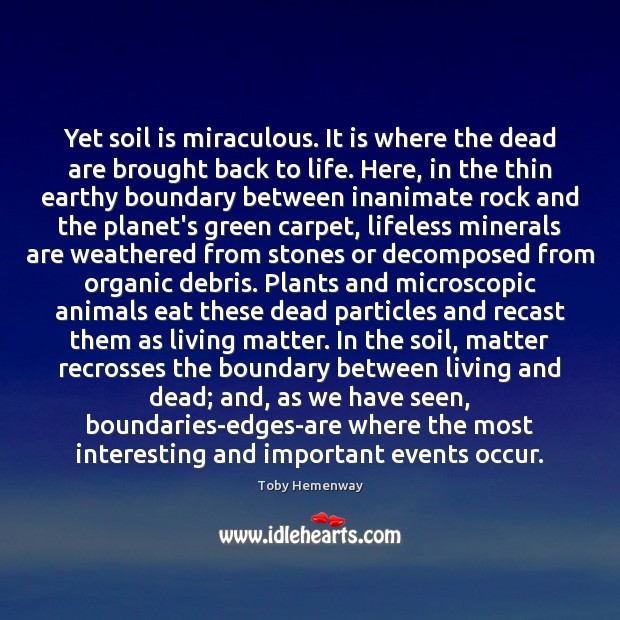 Yet soil is miraculous. It is where the dead are brought back Image