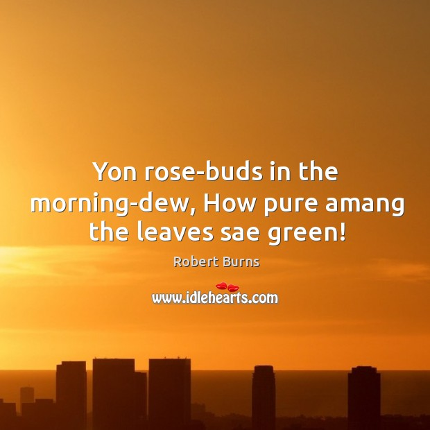 Yon rose-buds in the morning-dew, how pure amang the leaves sae green! Image