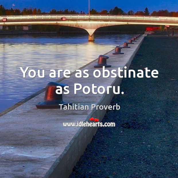 You are as obstinate as potoru. Tahitian Proverbs Image