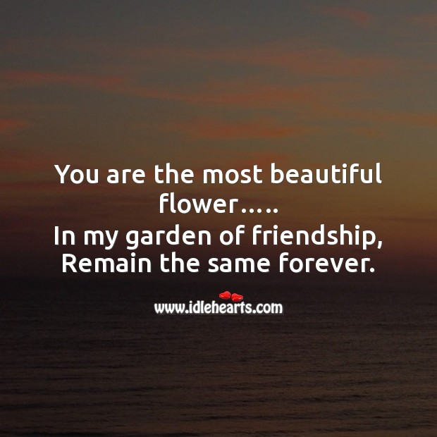 Image, You are the most beautiful flower in my garden of friendship