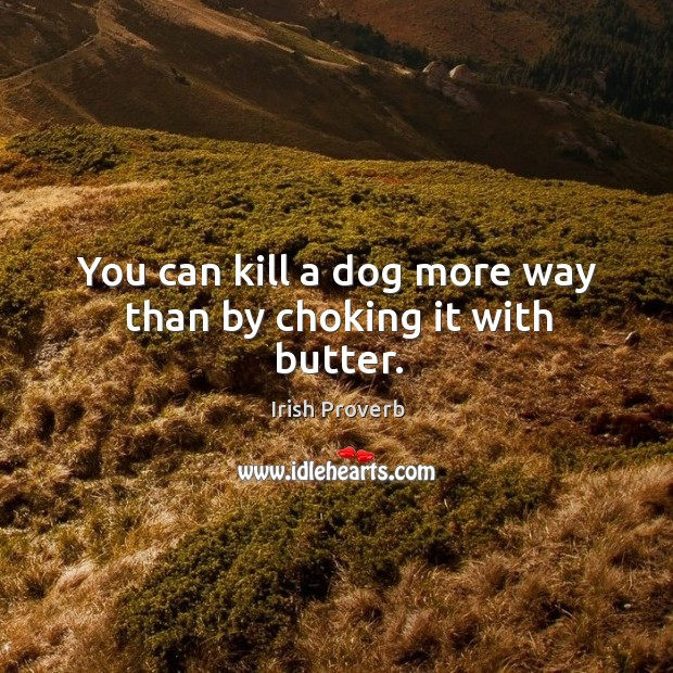 You can kill a dog more way than by choking it with butter. Irish Proverbs Image