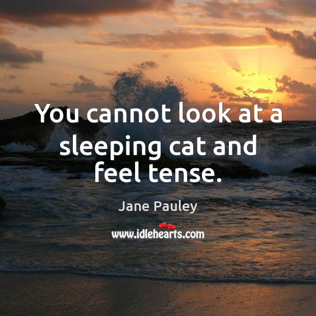 You cannot look at a sleeping cat and feel tense. Jane Pauley Picture Quote
