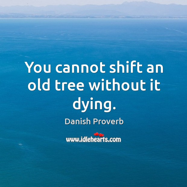 Image, You cannot shift an old tree without it dying.