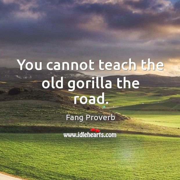 You cannot teach the old gorilla the road. Fang Proverbs Image