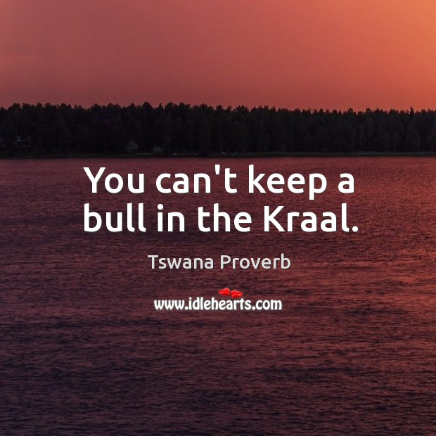 Image, You can't keep a bull in the kraal.