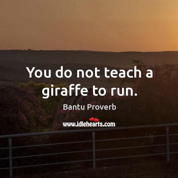 You do not teach a giraffe to run. Bantu Proverbs Image