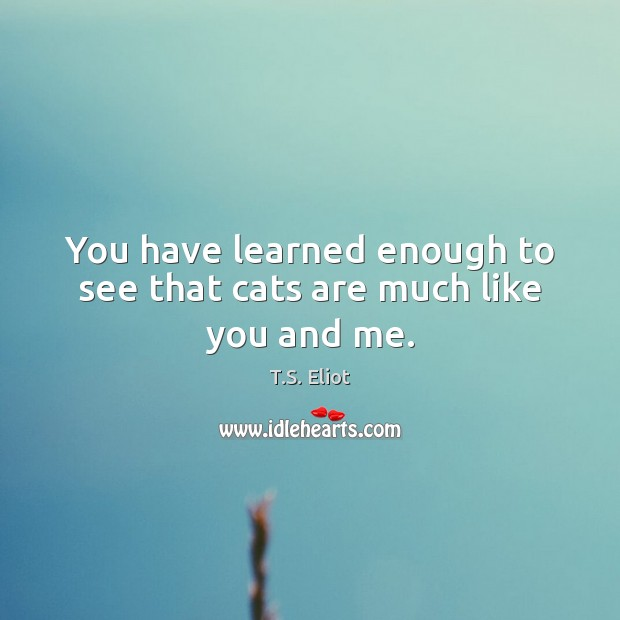 Image, You have learned enough to see that cats are much like you and me.