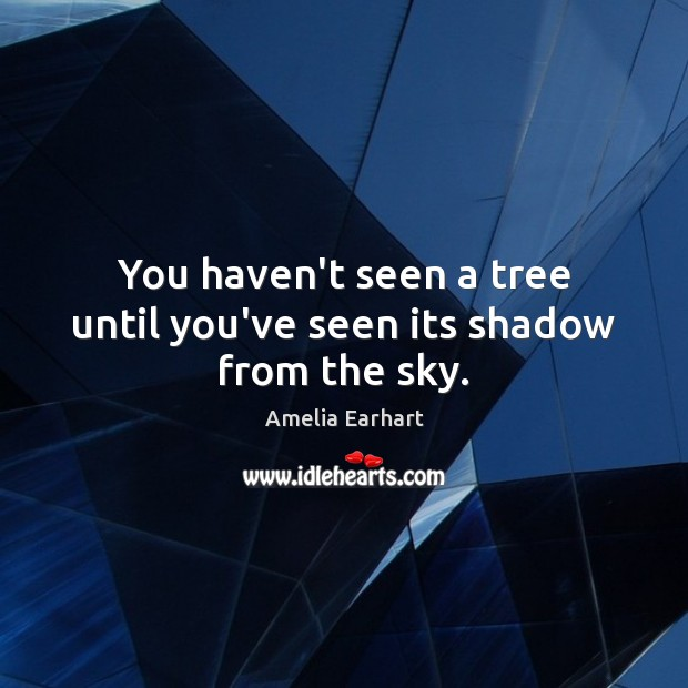 Image, You haven't seen a tree until you've seen its shadow from the sky.