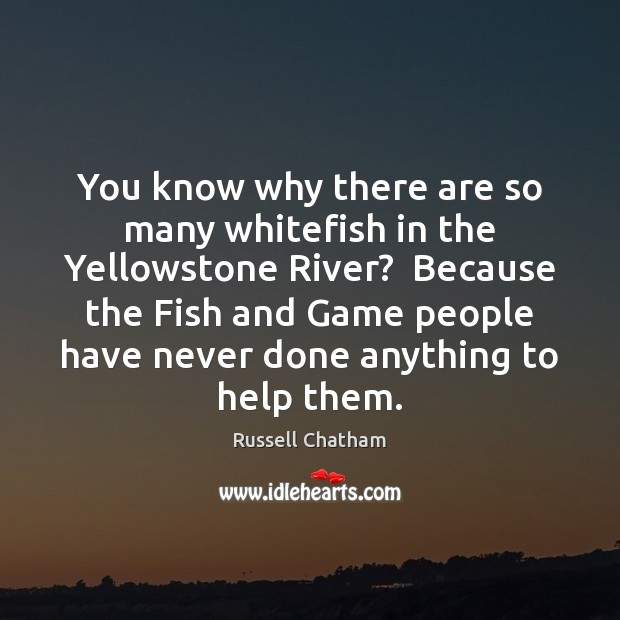You know why there are so many whitefish in the Yellowstone River? Image