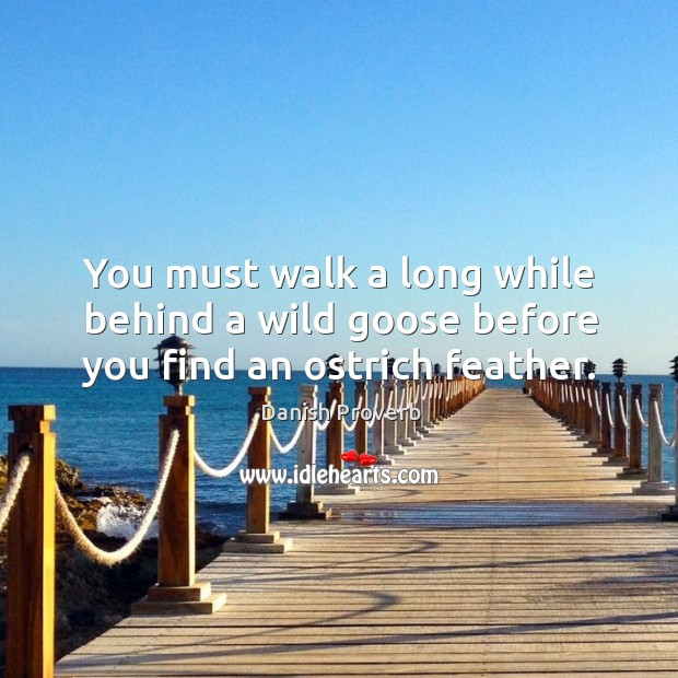 You must walk a long while behind a wild goose before you find an ostrich feather. Danish Proverbs Image